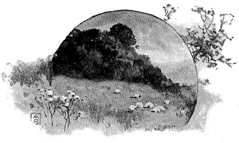 Trea-lined meadow with sheep grazing - Ezekiel 34:31