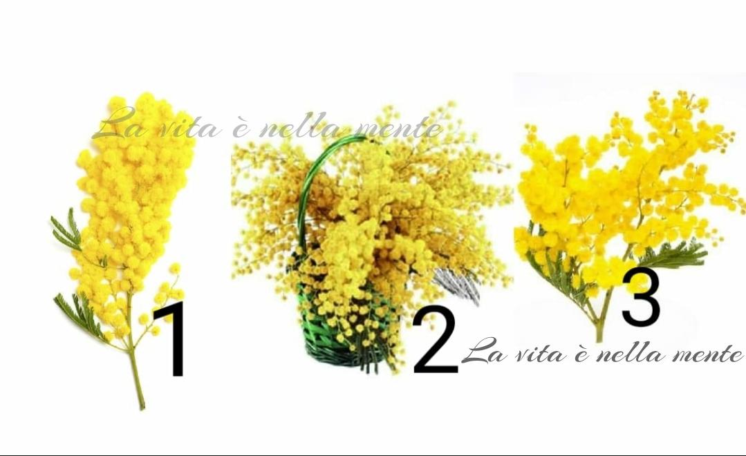 Scegli una mimosa e scopri la tua vera personalità!