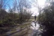 A Nemilasecondasezionedella corsa Trail del Bosco Sacro