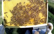 Corso di aggiornamento di apicoltura orientativa, presentato il progetto