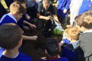 Frascati: Adottiamo un albero nel Parco Archeologico di Cocciano