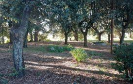 Castel Gandolfo: l'area verde di via Buozzi giace nel degrado