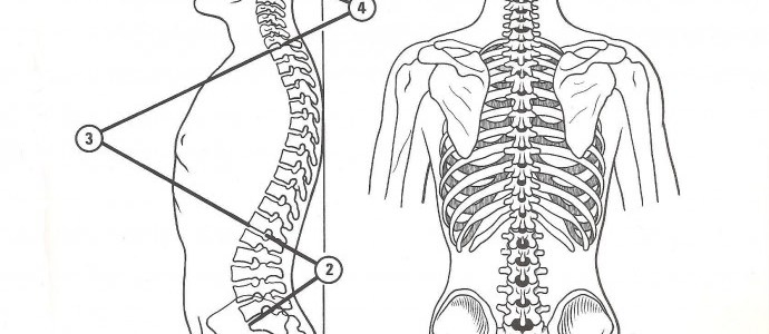 la forma del corpo | lavocedelcarro.it