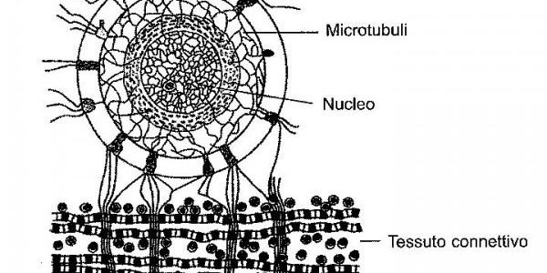 microtuboli | lavocedelcarro.it