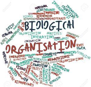 17024585-nube-di-parola-astratta-per-l-organizzazione-biologica-con-tag-e-termini-correlati-archivio-fotografico