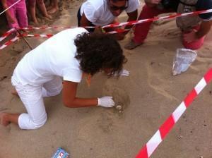 """La spiaggia di Maruggio in zona """"Capoccia"""" diventerà la culla di tartarughe """"Caretta Caretta""""."""