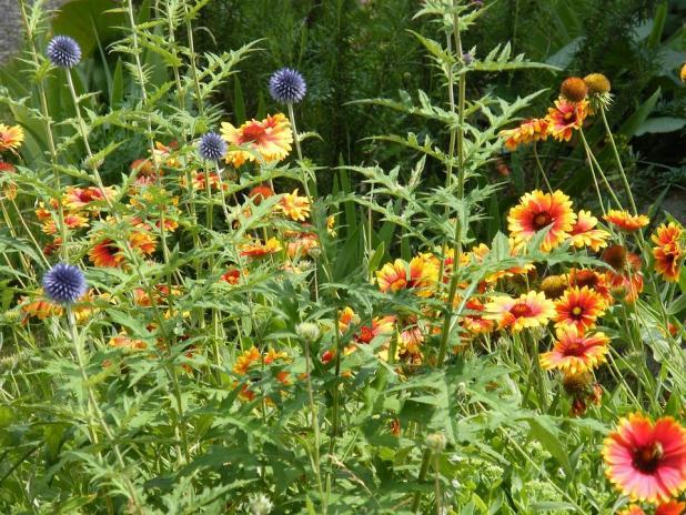 summer-flowers-103309_960_720