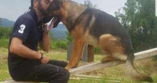 Forse morto per infarto, Kaos il cane di Amatrice. Indiscrezioni su esito autopsia del cane eroe non convince il proprietario