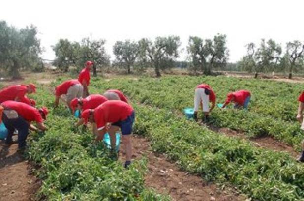 Sfruttamento di manodopera agricola: due condanne a Taranto