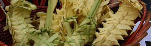 Oggi domenica delle Palme: driin,driin: Chi è? Volete palme?