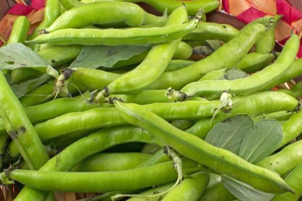 5 motivi per mangiare le fave fresche