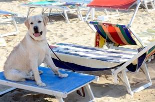 Regione Puglia: Ordinanza balneare 2019 da modificare è in contrasto con Legge Regionale 56/2018. Le associazione insorgono, lesi diritti animali e danni al turismo