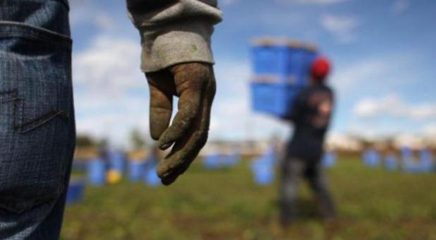 Ginosa (TA): immigrati sfruttati nei campi. Arrestato un caporale 29enne del Ciad