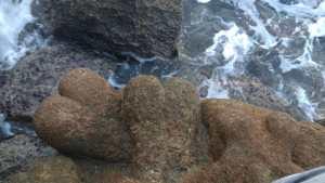 Torre Ovo: quelle strane sculture sul mare - IL VIDEO