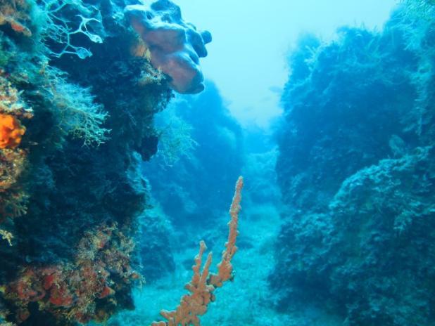 """""""In fondo al Mar: le meraviglie della vita subacquea nei mari pugliesi"""""""