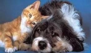Gli animali vanno affidati tenendo conto degli affetti del minore e, se non vi sono minori, potrà valutarsi l'intensità del rapporto con uno dei separandi