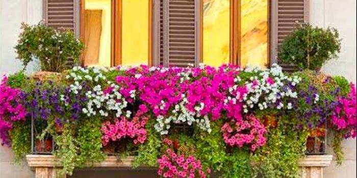 """El CVCA presenta """"talleres de balcones"""" para la recuperación de las plantas tras la Borrasca Filomena en la localidad."""