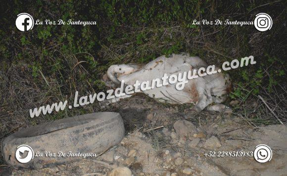 Choca contra una vaca en la Alazán – Canoas; resultó ileso   LVDT