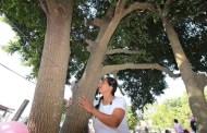 ¡¡Insólito!! Se casa mujer con un árbol en Pueblo Viejo