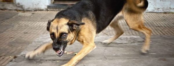 Dog bite attorney CLEVELAND