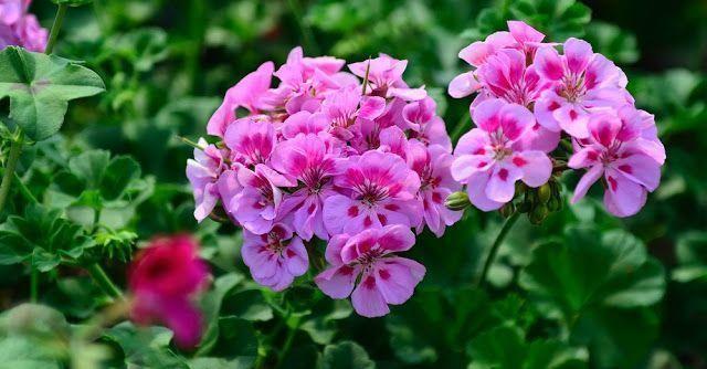 Flores para el jardín 5