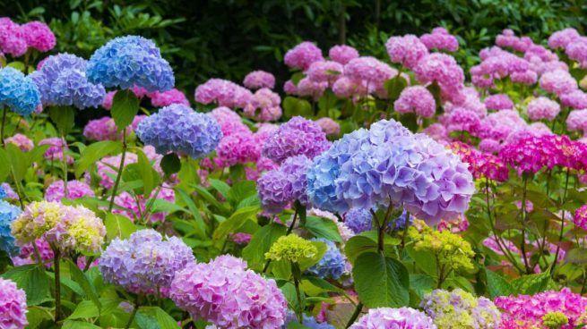 Flores para el jardín 2