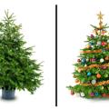 Plantas decorativas para la navidad 8