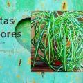plantas cintas bicolores