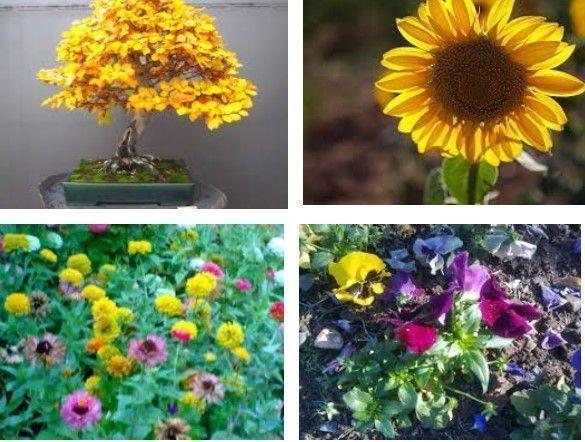 Especies para plantar en otoño 1