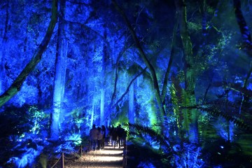 Ancient Forest at Enchanted: Forest of Light 2018 at Descanso Gardens; Credit: Shana Nys Dambrot