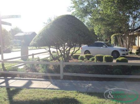 small tree driveway garden landscape