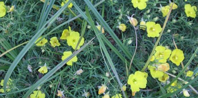seasonal color design landscaping texas