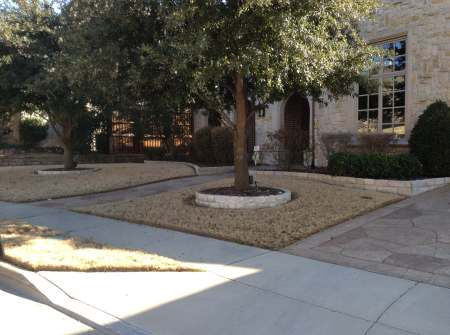 using raised-bed tree gardens to accent texas lawns