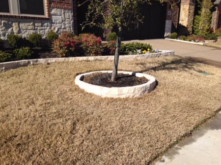 tree plot for small lawns dallas texas