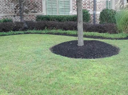 lawn care in dallas texas