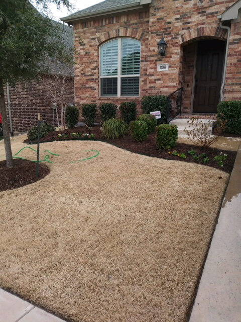 dry lawn watering