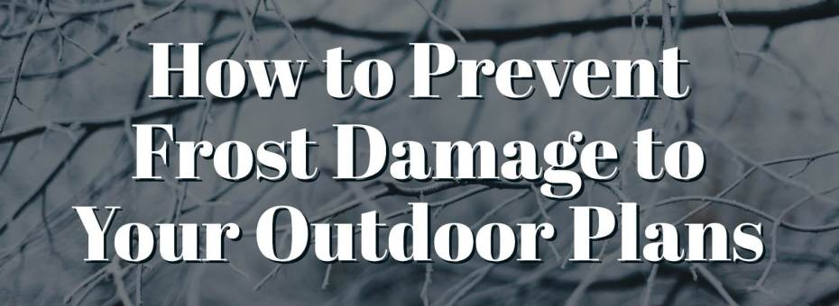 How to Prevent Frost Damage to Your Outdoor Plans