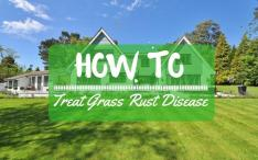 how-to-treat-grass-rust-disease