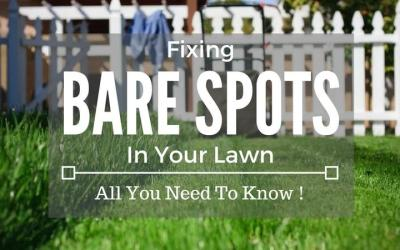 Fixing-Bare-Spots-In-Your-Lawn