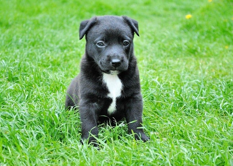 5-Easy-Steps-to-Maintain-the-Perfect-Lawn-with-a-Dog-2