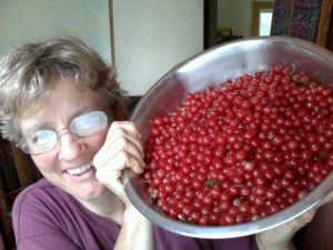 Harvested homegrown cherries