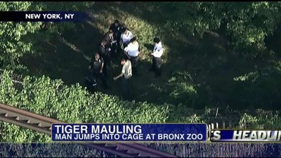 Mother Says Adderall caused Son to Jump into Bronx Zoo Tiger Den