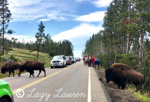 Yellowstone National Park | Hayden Valley