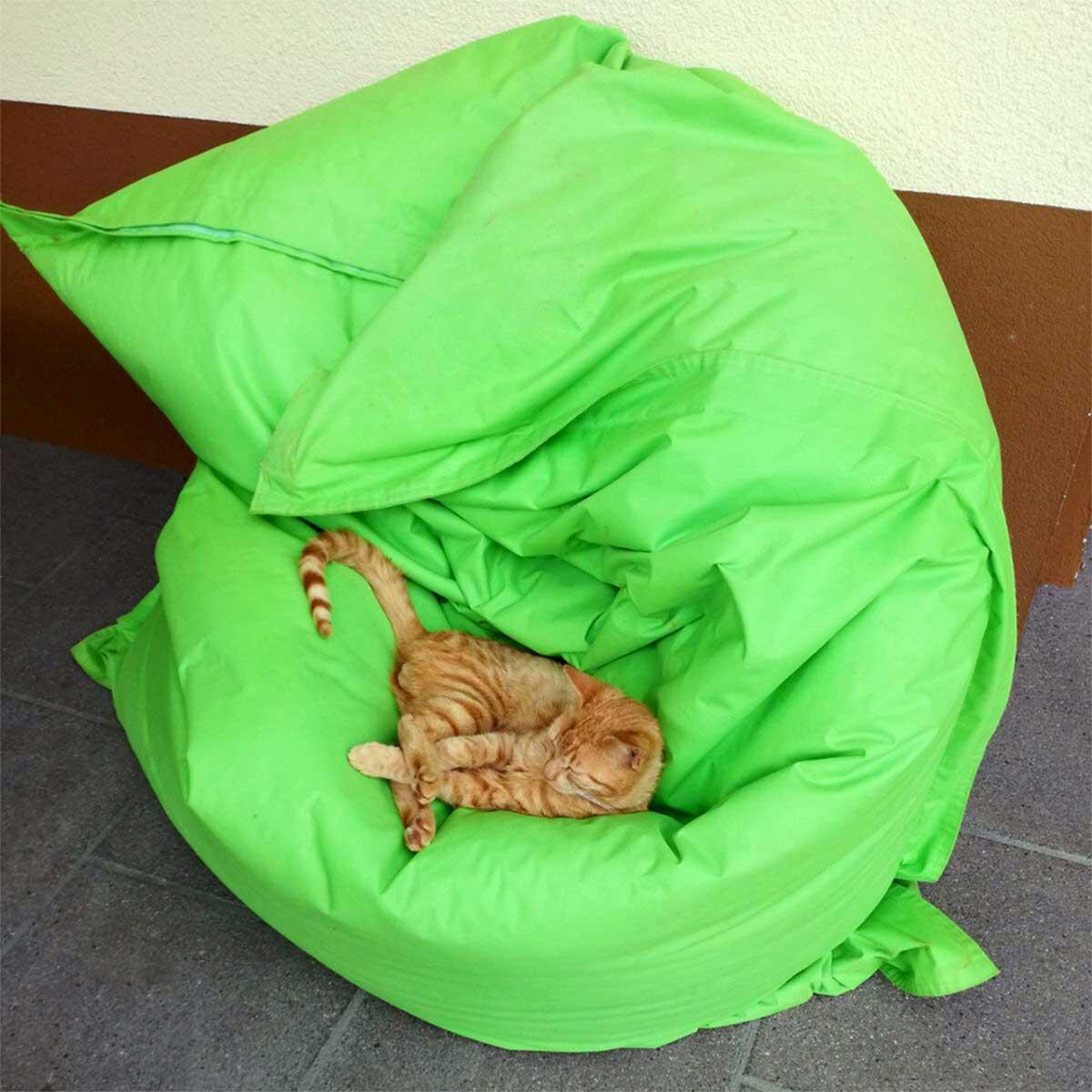 Harmonieren Katze und Sitzsack?