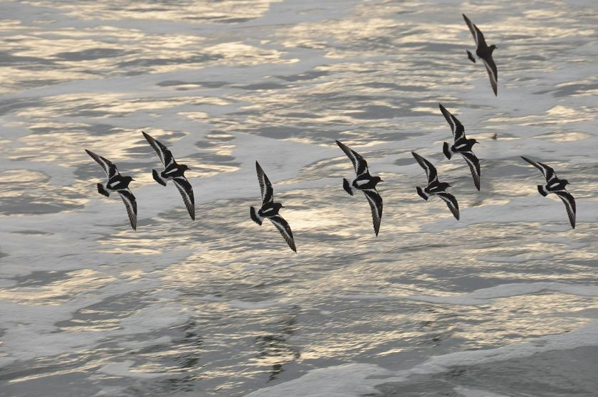 some-beautiful-seabirds-i-can039t-identify-81