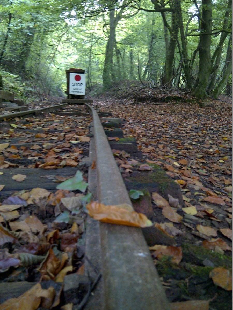 Leaf on the line