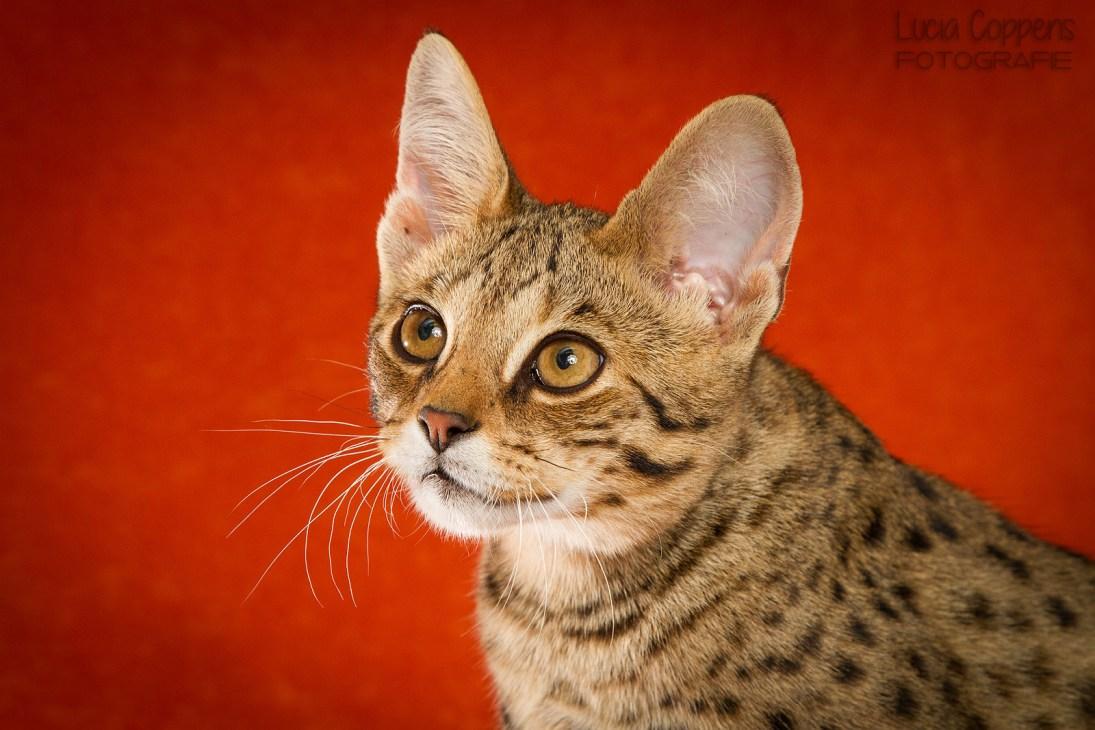 kattenfotograaf