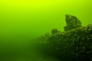 Underwater image of shipwreck with crustaceans