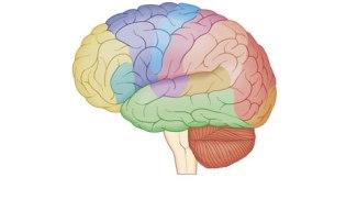 Big Brain