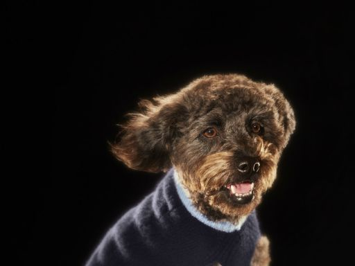 Mulberry launches new capsule collection for dogs and cats
